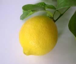Citron de menton vue 2