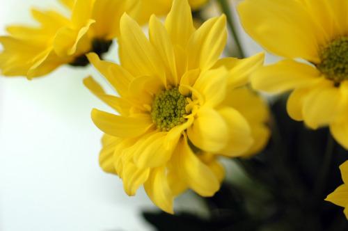 Fleurs deux vue 1