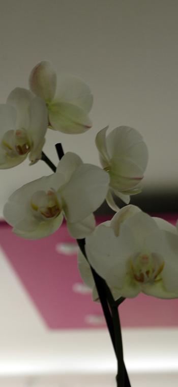 Orchidee vue 1
