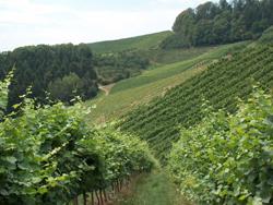 Vignobles foret noire