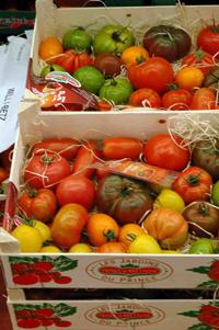 Rungis tomates vue 2