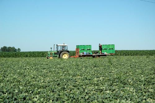 Camion recolte melon vue 1