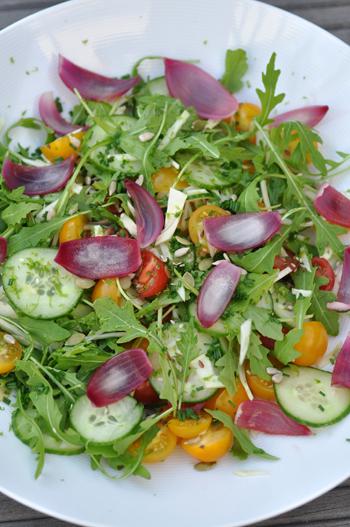Salade fenouil concombre roquette tomate oignons rouges vue 1