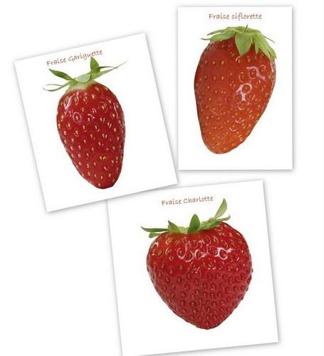 Varietes fraises francaises-001