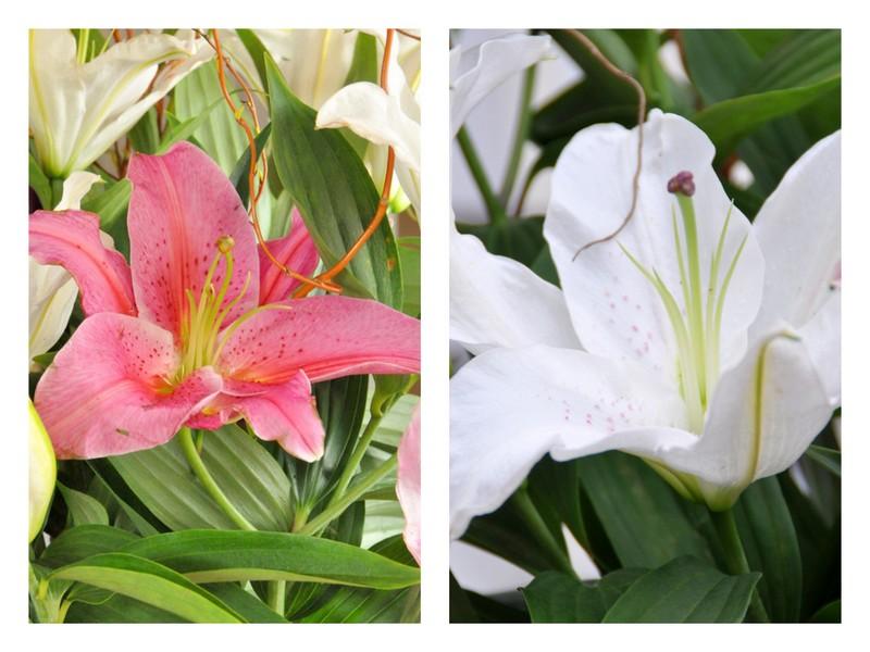 Fleurs de lys rose et blanche