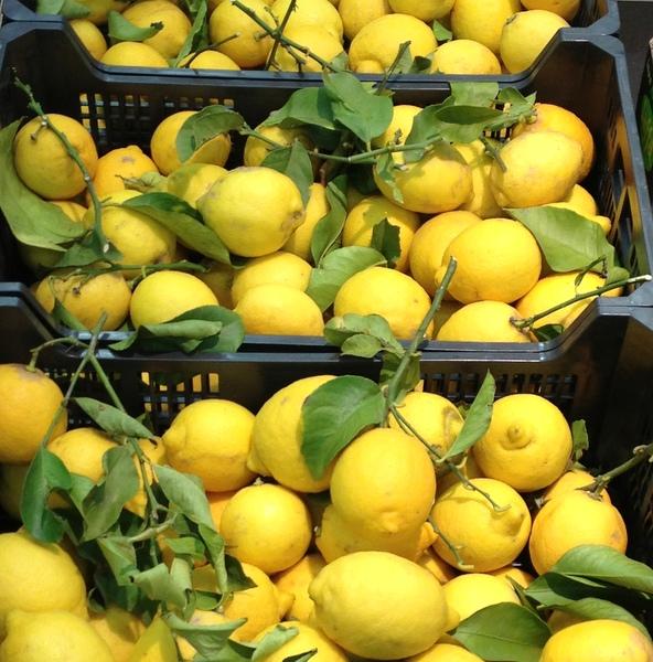 Citrons hiver 2016