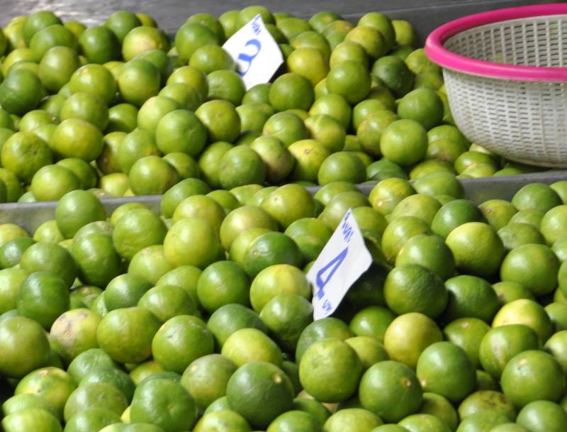 Citrons verts marches thailande