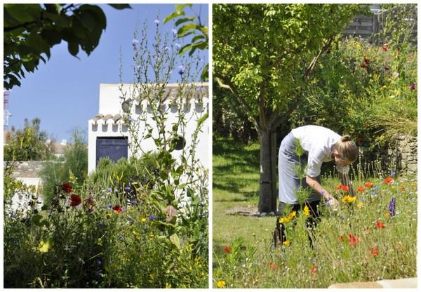 Jardin herbes la marine noirmoutier alexandre couillon