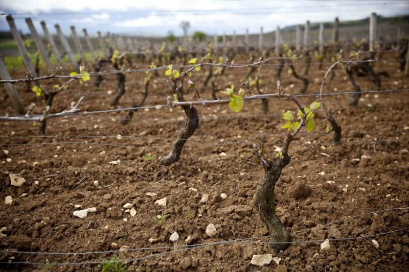 Vignes-en-Bourgogne©AnneReverdyDemay