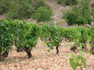 Vignes_cahors_deux_vue_1