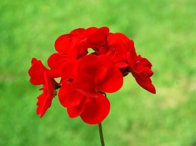 Fleur_jardin_vue_1