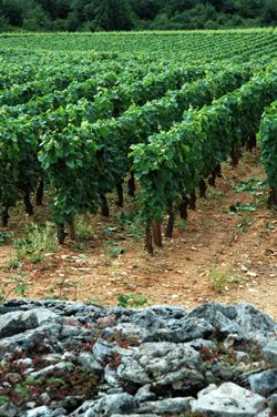 Bourgogne_vue_1