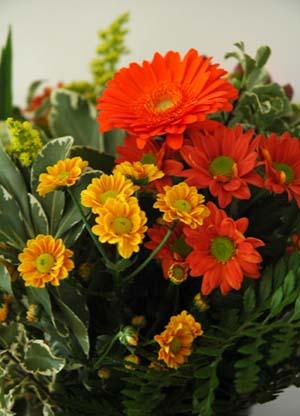 Fleurs_vue_1_2