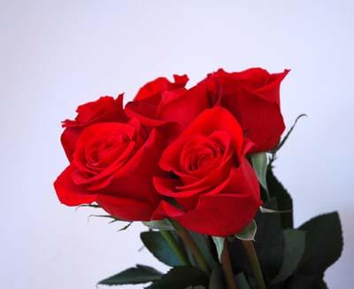 Bouquet_de_roses_deux_vue_1